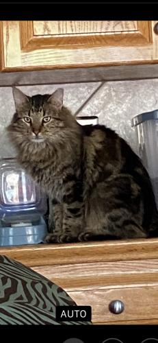 Lost Male Cat last seen I don't live anywhere near any landmarks but the Main Street out of my subdivision is Rees. St. Ext. which is the main road in and out of Breaux Bridge. , Breaux Bridge, LA 70517