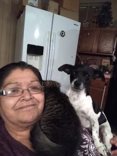 Lost Male Dog last seen 40st st catherine, Phoenix, AZ 85042