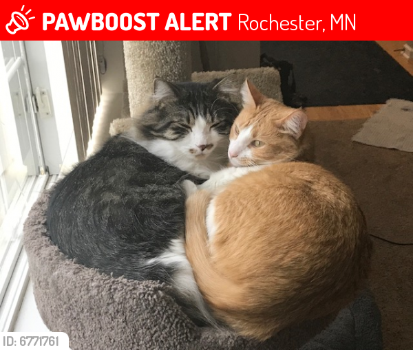 Lost Male Cat last seen Near Lookout Place NW, Rochester, MN 55901