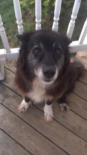 Lost Female Dog last seen W Queen Street area - Edenton in Chowan County, Edenton, NC 27932