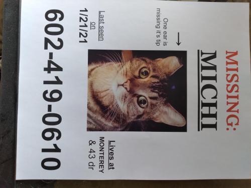 Lost Female Cat last seen Near pl and monterey way phoenix az , Phoenix, AZ 85031