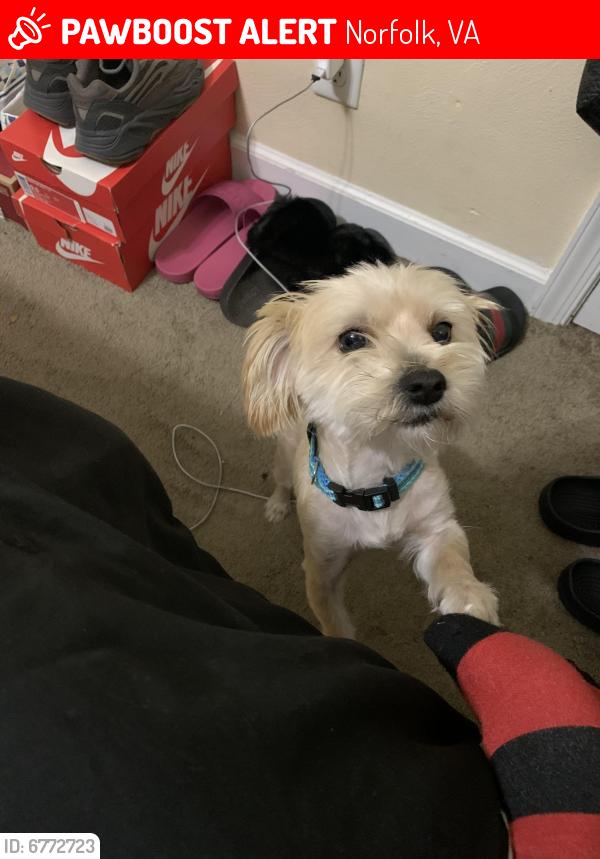 Lost Female Dog last seen School nearby , Norfolk, VA 23513