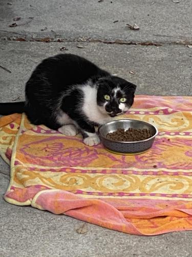 Found/Stray Unknown Cat last seen Near 8th Bay St, Norfolk VA, Norfolk, VA 23518