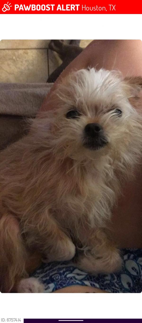 Lost Female Dog last seen Near Woodwild Dr, Houston, TX 77038