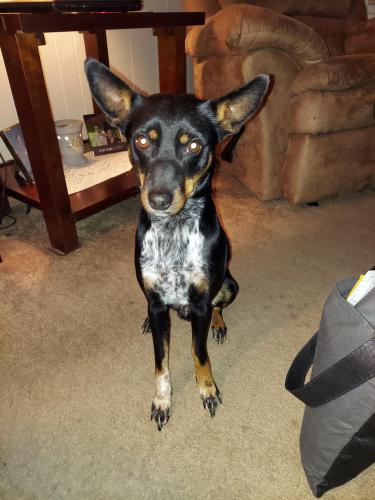 Lost Male Dog last seen Walnut, Hampton, VA 23669