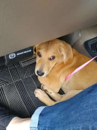 Lost Female Dog last seen Lewis Chapel ,Poe road, Dunlap, TN 37327