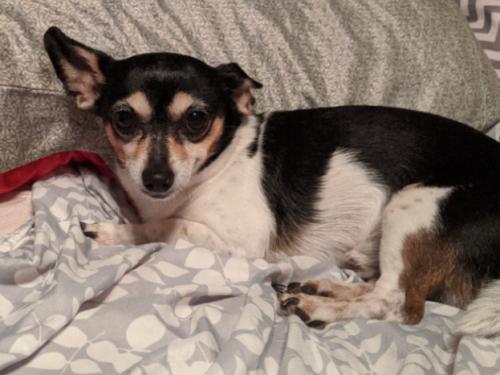 Lost Male Dog last seen Norfolk Highlands Area, Chesapeake, VA 23325