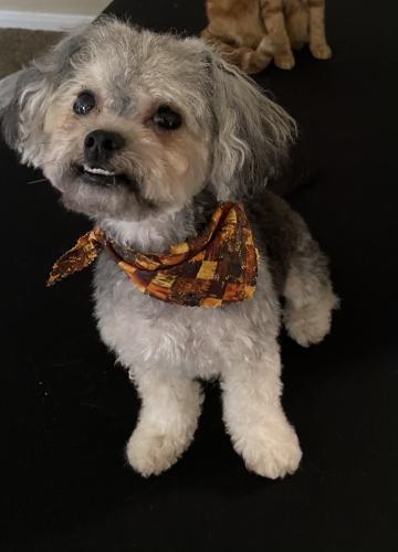 Lost Male Dog last seen meadowglen lane , Houston, TX 77042