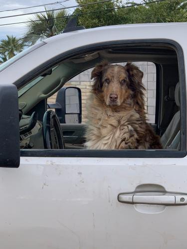 Lost Male Dog last seen Scottsdale Road South of Oak, Scottsdale, AZ 85257