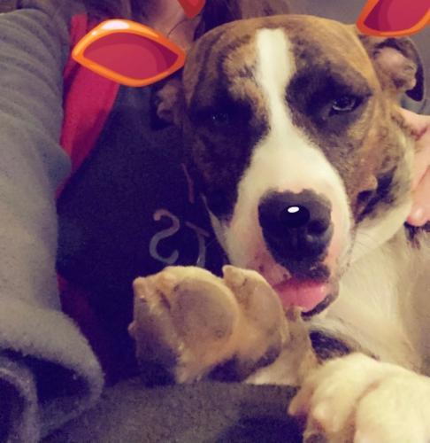 Lost Female Dog last seen Eugenia, Chesapeake, VA 23324