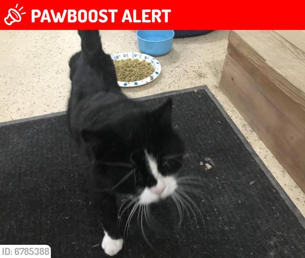 Lost Male Cat last seen Near th Avenue , Mazeppa Township, MN 55956