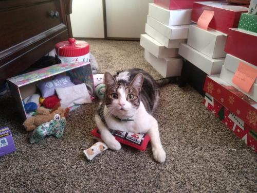 Lost Unknown Cat last seen Marlay/Driftwood/Banana, Fontana, CA 92337