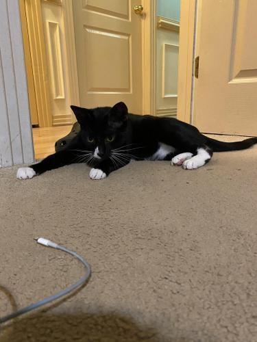 Lost Female Cat last seen Near Denver Ave , Chesapeake, VA 23322