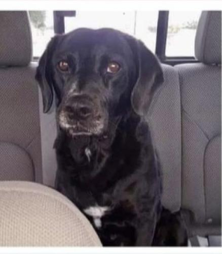 Lost Male Dog last seen Hawthorne Avenue between Cedar and Linden, Rialto, CA 92316