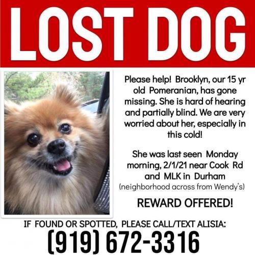 Lost Female Dog last seen Cook rd near mlk, Durham, NC 27713