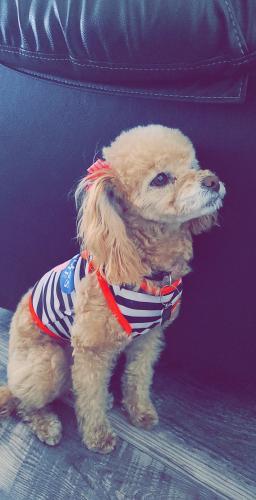 Lost Female Dog last seen Near ave w Missouri , Glendale, AZ 85303