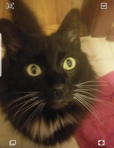 Lost Male Cat last seen Maxwood ct and Goose creek lndg, Virginia Beach, VA 23462