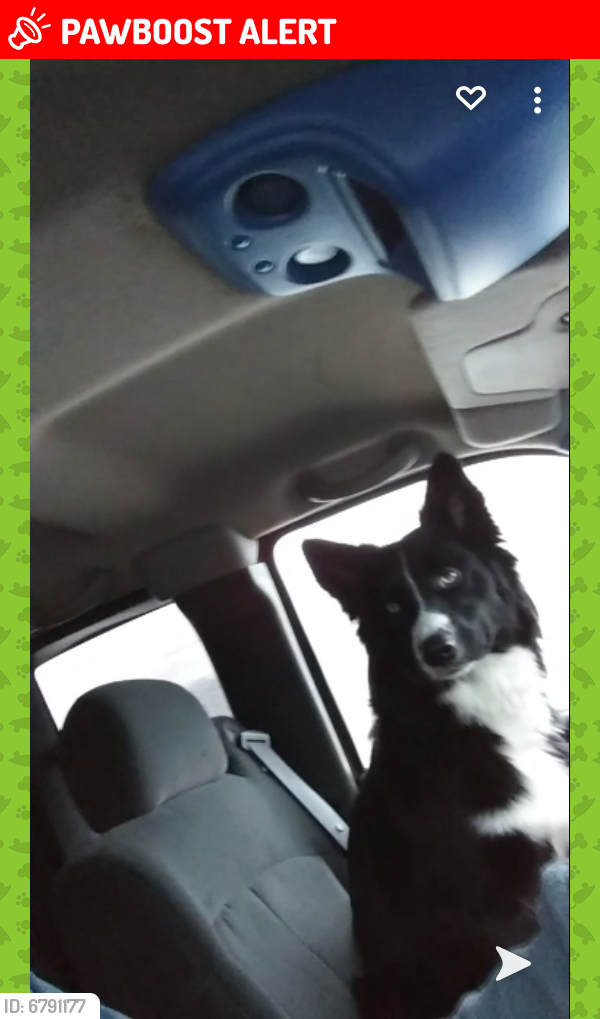 Lost Male Dog last seen County rd 72, Gillford Township, MN 55041