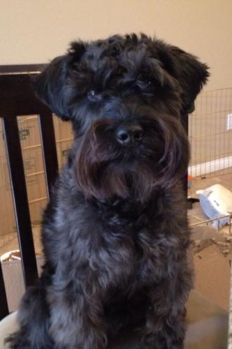 Lost Male Dog last seen Burnette drive Hampton va, Hampton, VA 23663