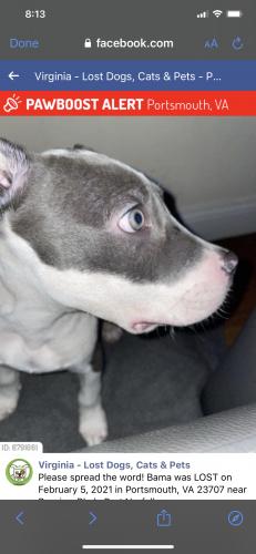 Found/Stray Female Dog last seen Bayview Blvd Port Norfolk VA, Portsmouth, VA 23707