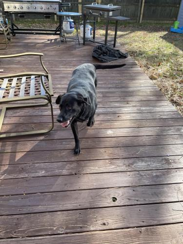 Found/Stray Female Dog last seen Birchwood neighborhood va beach, Virginia Beach, VA 23452