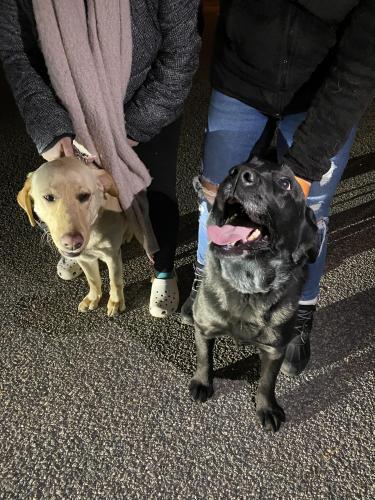 Found/Stray Female Dog last seen Virginia Beach Blvd and witchduck , Virginia Beach, VA 23451