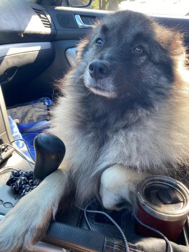 Lost Female Dog last seen Granby street and west seaview , Norfolk, VA 23503