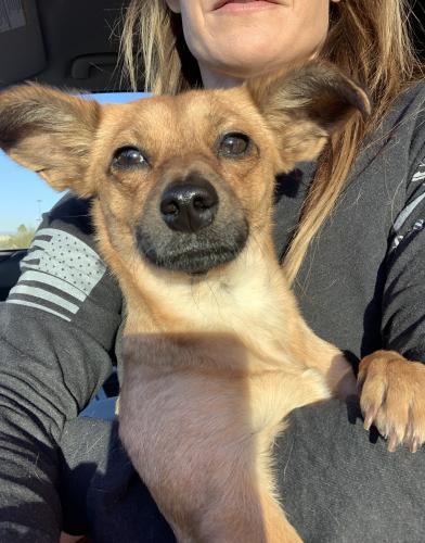 Found/Stray Male Dog last seen Western and 5th Street, Avondale, AZ, Avondale, AZ 85323