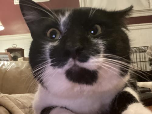 Found/Stray Male Cat last seen True Neck Road, Chesapeake, VA 23321