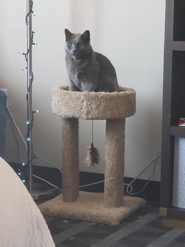 Lost Male Cat last seen Linq hotel parking garage, Las Vegas, NV 89109