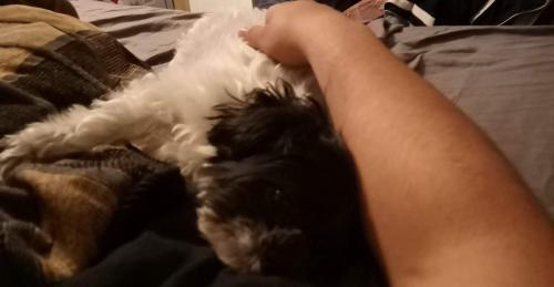 Lost Female Dog last seen Ritzcraft dr, Virginia Beach, VA 23462