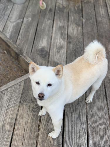 Lost Female Dog last seen North great neck road and harbor lane, Virginia Beach, VA 23454