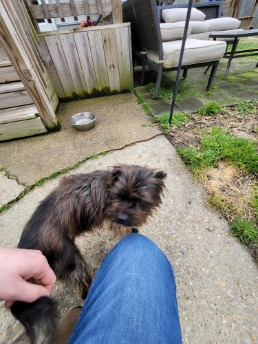 Found/Stray Female Dog last seen Channing Ave and Cushing St, Portsmouth, VA 23702