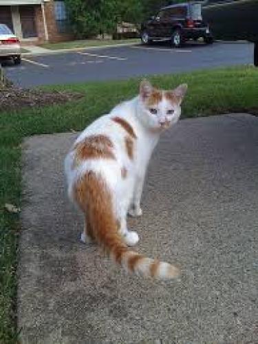 Lost Female Cat last seen Near Mt Zion Church Rd, Culpeper, VA 22701