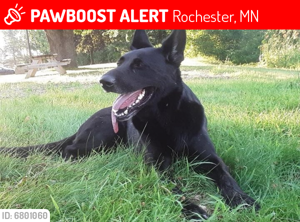 Lost Male Dog last seen Olmsted co rd 9, co rd 11, Rochester, MN 55902