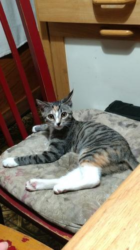 Lost Female Cat last seen Casuda Canyon Dr/Verde Vista Dr, Monterey Park, CA 91754