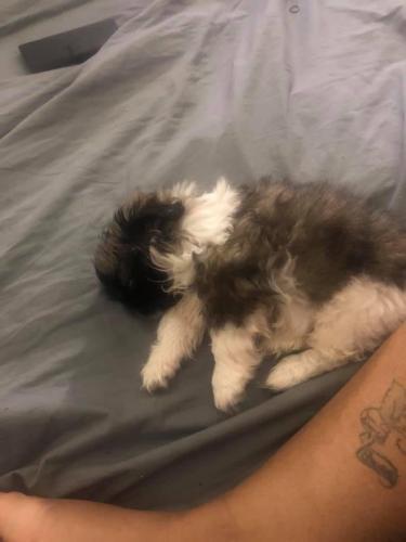 Lost Male Dog last seen Langston Blvd, Hampton, VA 23666