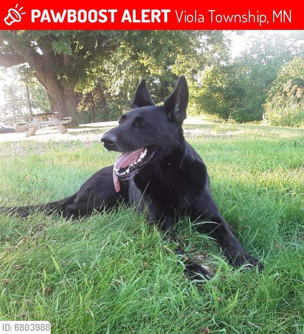 Lost Unknown Dog last seen Viola Rd Viola, MN, County 42, Viola Township, MN 55934