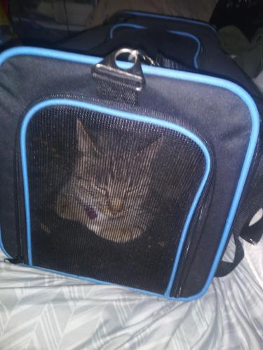 Found/Stray Female Cat last seen Harper's road , Virginia Beach, VA 23454