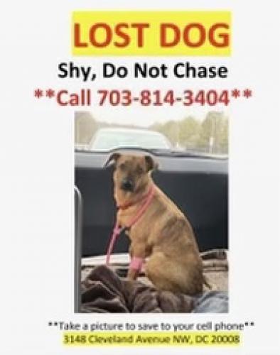 Found/Stray Female Dog last seen Quincy St & Piney Branch , Washington, DC 20011