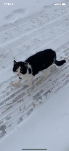 Found/Stray Unknown Cat last seen Ryan Rd and Old Martin Rd, De Pere, WI 54115