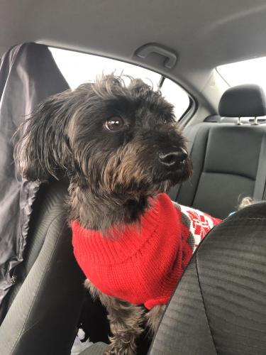 Lost Male Dog last seen Walmart Battlefield blvd, Chesapeake, VA 23320