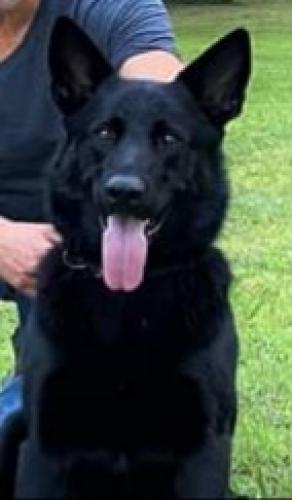 Lost Male Dog last seen Near NW 88TH AVENUE ROAD REDDICK FL 32686, Reddick, FL 32686