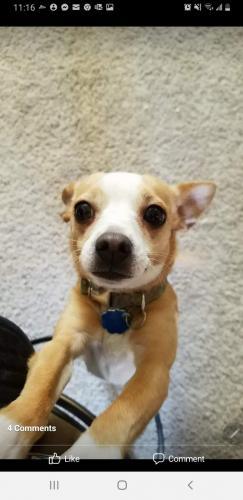 Lost Female Dog last seen 39th Ave and Mcdowell Rd. , Phoenix, AZ 85009