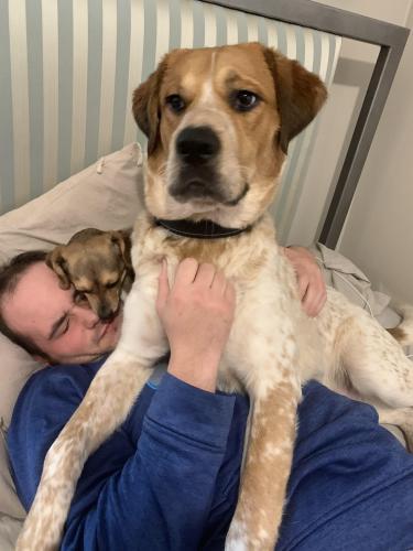 Lost Male Dog last seen Norvella heights , Norfolk, VA 23513