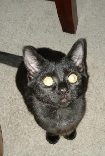 Lost Female Cat last seen Between Vellines Ave && Campostella Rd , Chesapeake, VA 23324