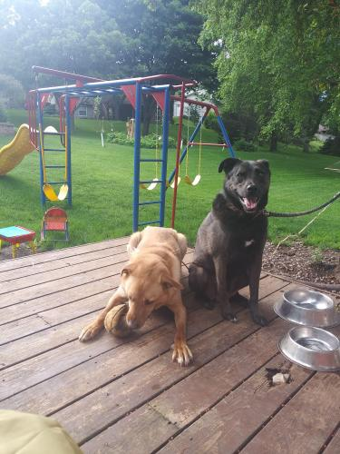 Lost Male Dog last seen Parkwood Hills/Quarry Hill, Rochester, MN 55906