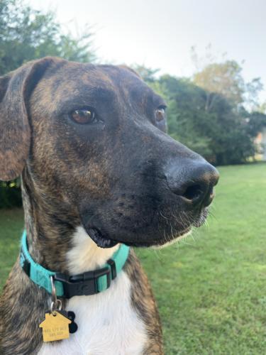 Lost Male Dog last seen VB Blvd / Rosemont Birchwood area, Virginia Beach, VA 23452