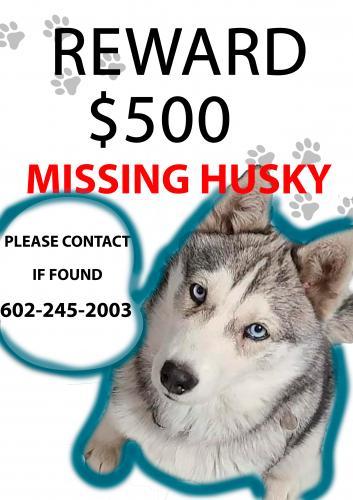 Lost Female Dog last seen Near ave & Roosevelt , Phoenix, AZ 85009