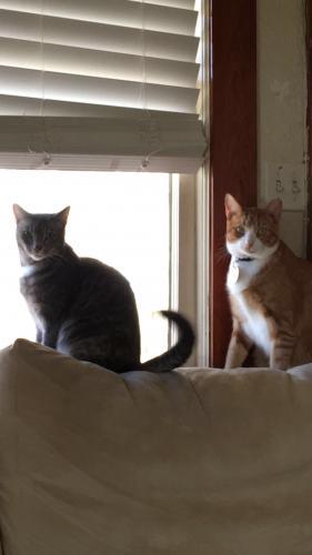 Lost Female Cat last seen Cooke Elementary , Virginia Beach, VA 23451